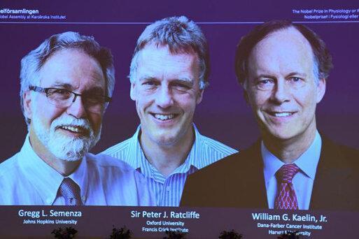 نوبل پزشکی 2019 به پژوهشگران پاسخ بدن به کمبود اکسیژن رسید
