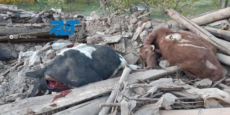 خسارت زلزله به 320 واحد دامی در 65 روستای آذربایجان شرقی، خسارت 300 میلیارد ریالی به بخش کشاورزی