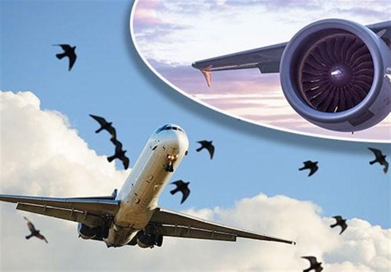 گزارش اولیه سقوط هواپیمای پاکستانی منتشر شد، برخورد دسته پرندگان با هواپیما یکی از علل سقوط