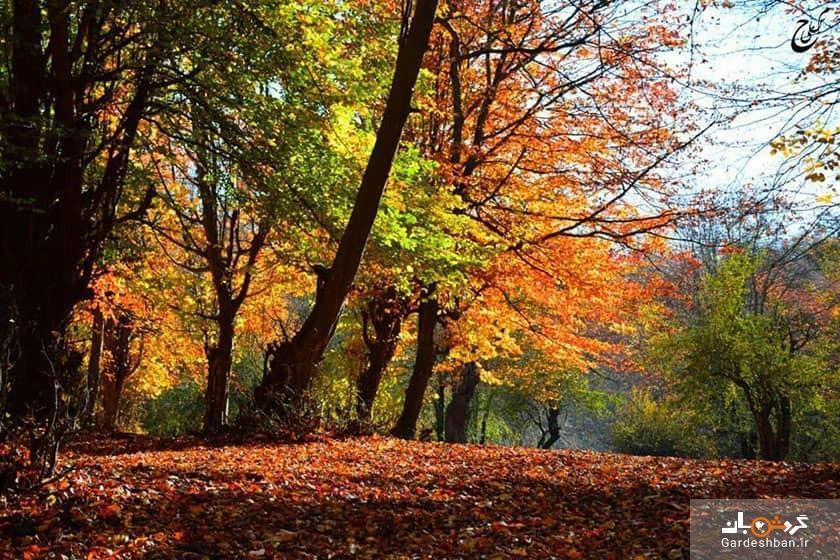 پارک جنگلی بزچفت یا بابلکنار؛ بهشت گمشده بابل، عکس