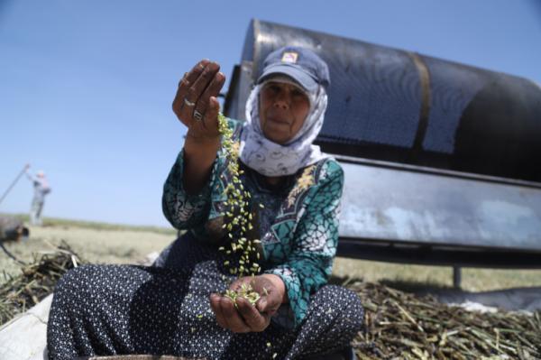 جنگ سوریه و تغییر ارزش های سنتی، زنان نان آور می شوند
