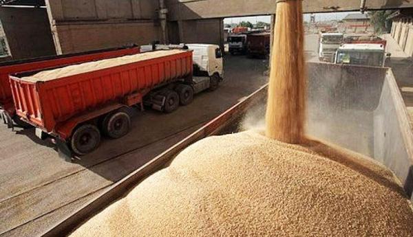 هشدار وزیر جهاد کشاورزی به استان های مرزی درباره قاچاق گندم